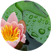 Floral Acvatic